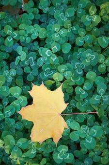 クローバーの葉と落ち葉、セレクティブフォーカスの自然な背景のクローズアップ