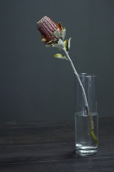 Бэнксия цветок на вазе