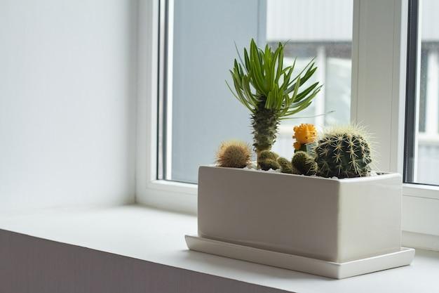 Маленькие разноцветные кактусы и суккуленты в большой белый горшок на подоконнике, мягкий фокус, место для текста.