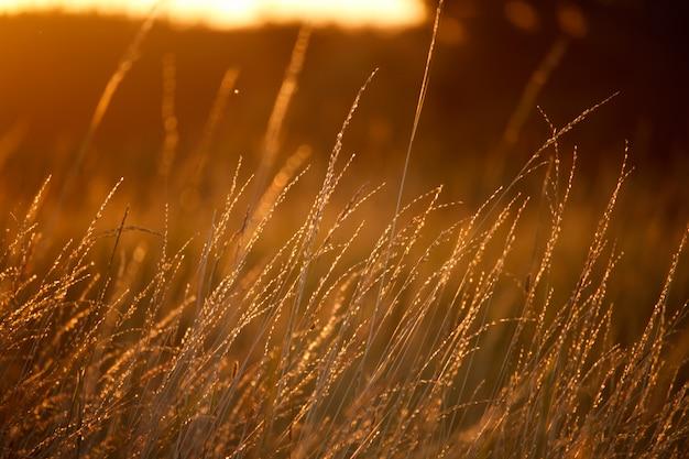 草、明るいオレンジ色の太陽の牧草地のある風景