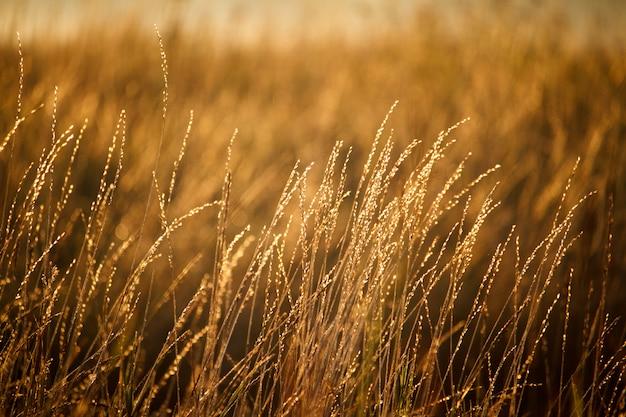 セレクティブフォーカス日の出で明るいオレンジ色の牧草地のある風景