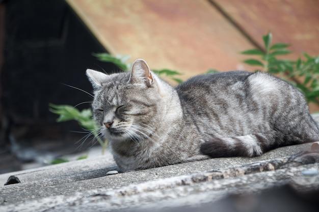灰色のスレート屋根に緑の目を持つクローズアップの愛らしいショートヘアストライプ灰色猫