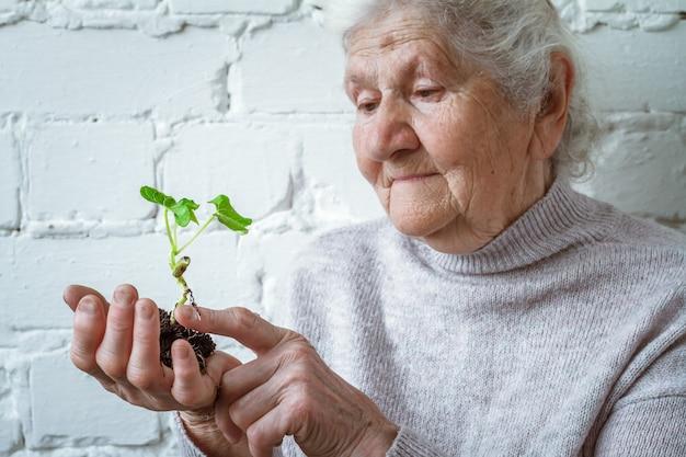 植物の成長を保持しているボランティアの女性