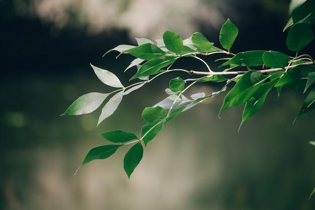 ぼやけた秋の森の緑の枝をクローズアップ
