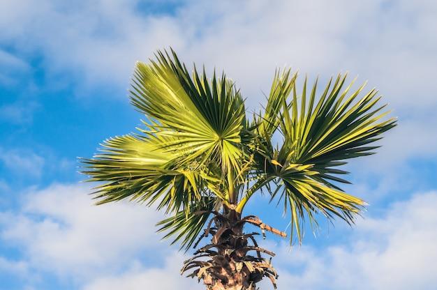 空に対してヤシの木