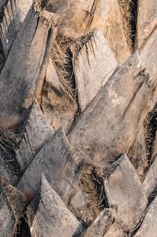 ヤシの木の樹皮の質感