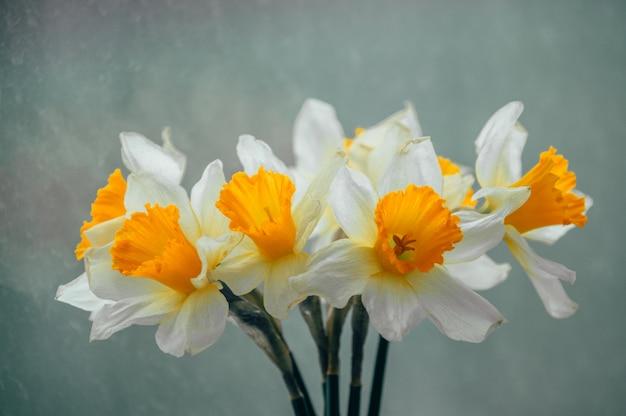春の水仙の花束