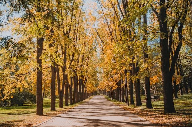Осенний городской парк