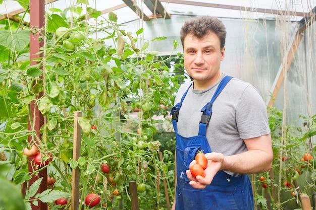 温室で野菜を収穫する若い魅力的な女性のビュー