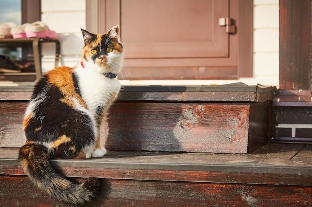 Трехцветный кот сидит на ступеньках дома под солнцем