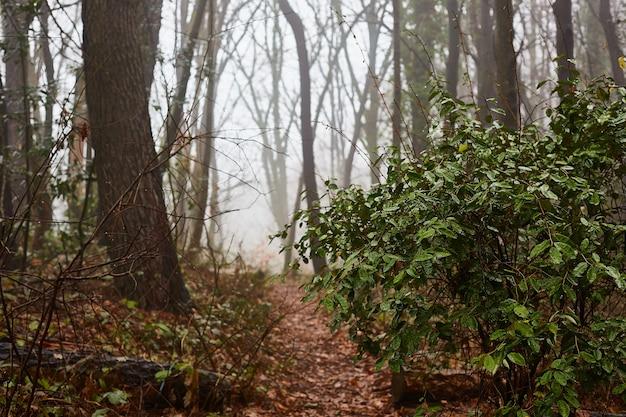 Густой туман. дорога в естественном лесу