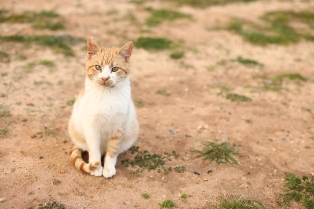 Красный и белый кот на улице в солнечный летний день