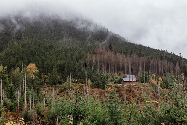 Осенний вид, желто-зеленые деревья и заснеженные горы