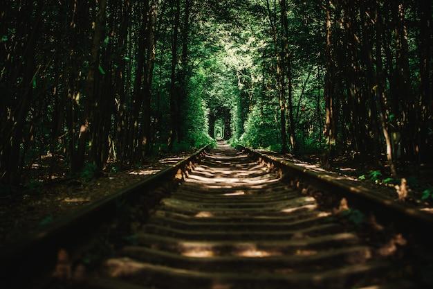 Заброшенная железная дорога в зеленом лесу