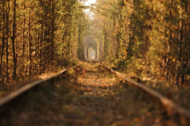 Осенний осенний туннель любви