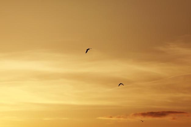 日没前の空、空の鳥。夕焼けと夕暮れの間に飛んでいる鳥