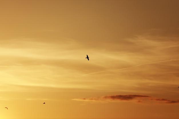 日没前の空、空の鳥。夕焼けと夕暮れの空の前に飛んでいる鳥