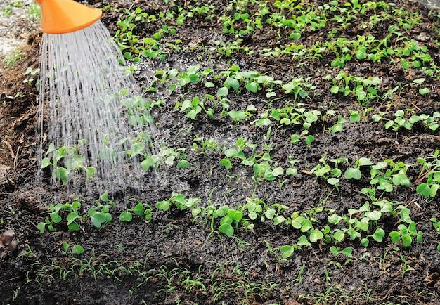 Молодые саженцы поливают из лейки, видны струи воды и влажная земля