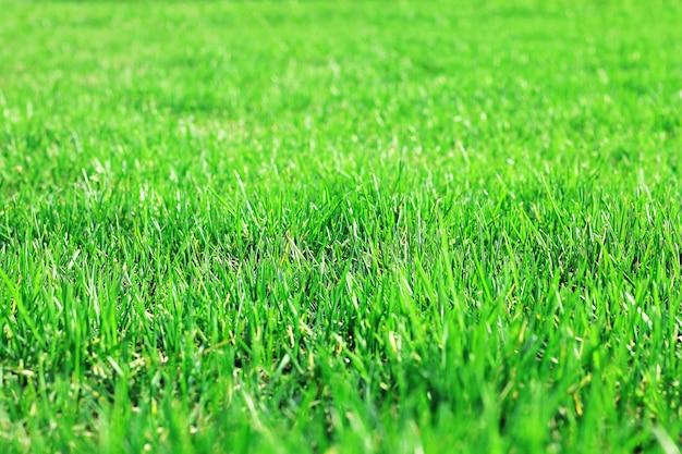 芝生の草、緑豊かな芝生の草、草のテクスチャ。