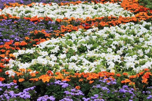 夏の花と花壇。明るく晴れた日、広い写真。