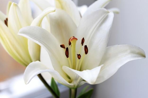 白いユリの花の花束。クローズアップ、光咲く結婚式の背景。