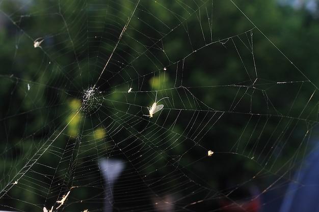 緑の昆虫とクモの巣。