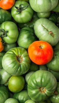 新鮮なグリーントマト、クローズアップ。緑の完熟トマトの背景。緑のトマトがたくさん。バナー。