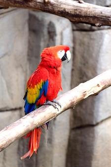 Красный попугай в зоопарке