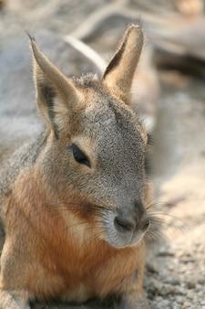 カンガルー動物園サファリ