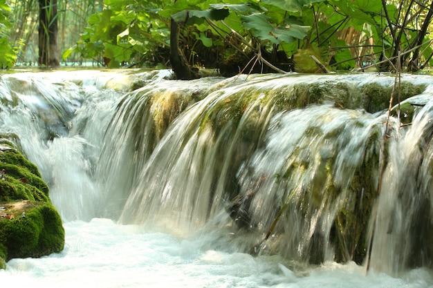 森の中の美しい滝
