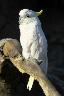 Белый попугай в зоопарке