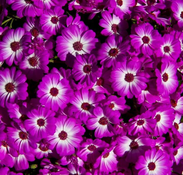 ピンクと白の花のフィールド