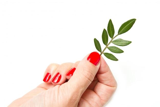赤いマニキュアと緑の葉を持つ女性の手