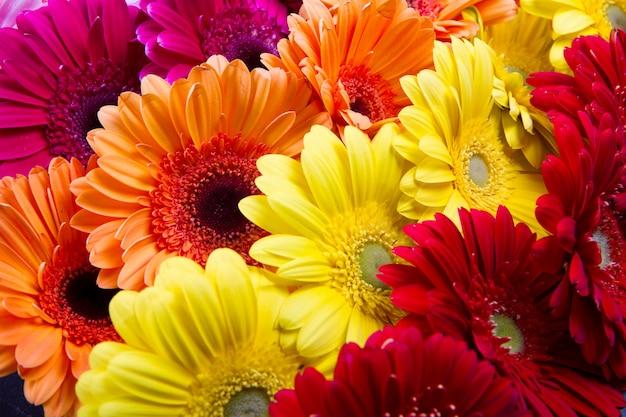 Цветок герберы