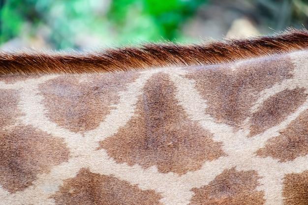 スポッティングパターンを持つキリンの肌