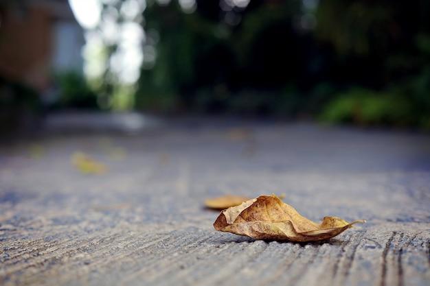 Сухой лист на дороге среди размытых зданий и зеленых деревьев