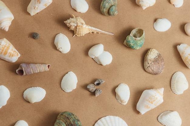 明るい背景で貝殻。平面図
