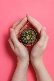 Женская рука держать зеленый кактус в горшке на розовом фоне пастельных цветов