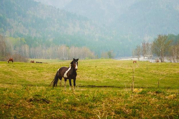 牧草地の黒い馬