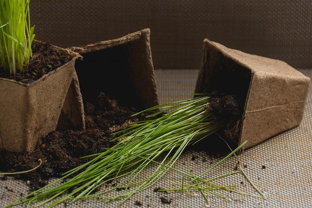 植物の季節移植の準備