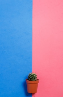 ピンクとブルーのパステルカラーの背景に鍋に緑のサボテン