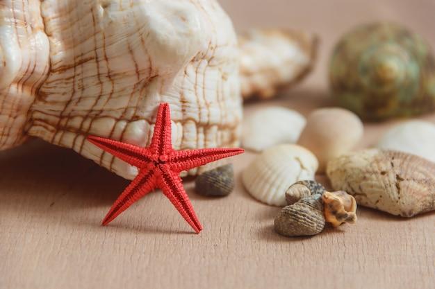 明るい背景に貝殻