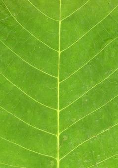 葉のクローズアップ