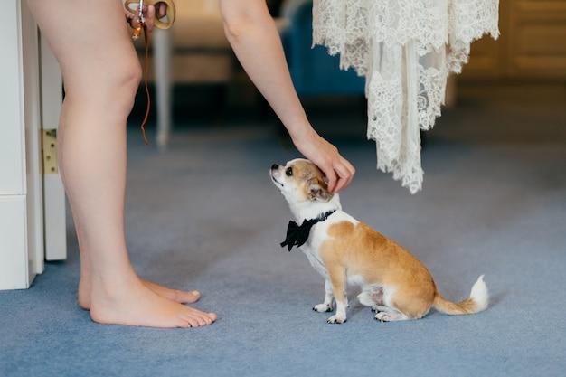 認識できない女性のトリミングされたショットは、首に蝶ネクタイをした小さな犬を飼いならし、友好的な関係にあります。人、動物のコンセプト。