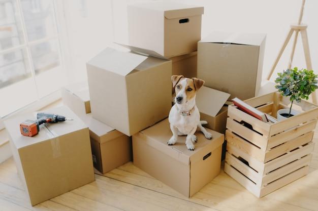 Собака домашнего животного позирует на картонных коробках с личными вещами