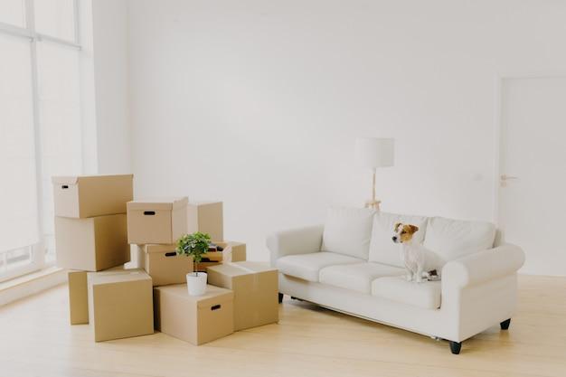 Фото маленькой собачки на удобных диванных позах