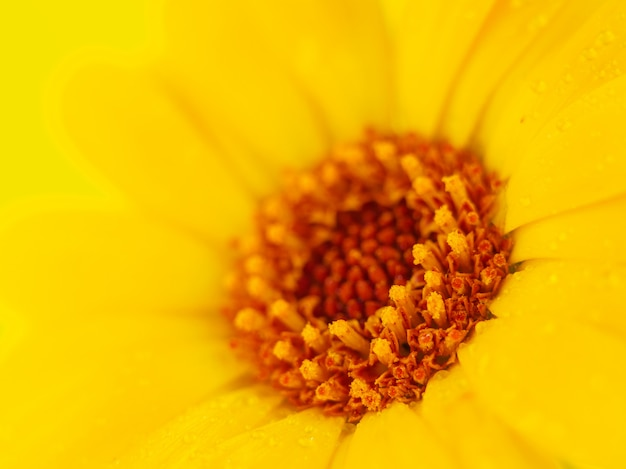 黄色の背景に黄色の花。マクロ撮影。