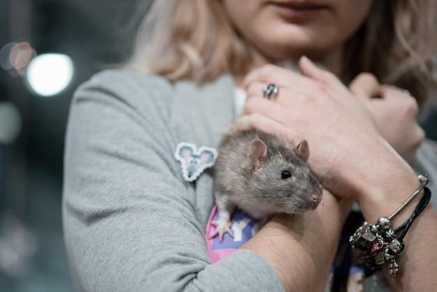 Улыбающаяся маленькая девочка держит в руках двух домашних декоративных крыс