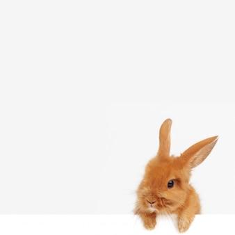 Пасхальный кролик выглядывает из-под нижнего края открытки.