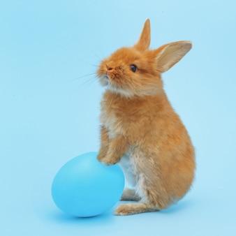 青い表面に青い塗られた卵と小さな赤いふわふわウサギ。イースター休暇の概念